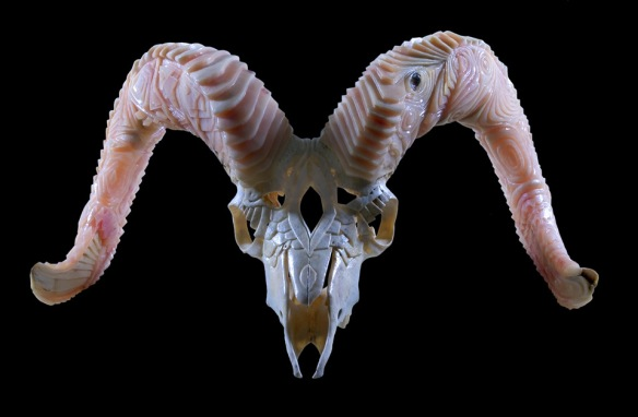 Dall Sheep Duality, 2004 by Shane Wilson (dall sheep horns and skull)